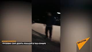 КамАЗ на большой скорости сбил 9 лошадей в Таш-Кумыре видео после ДТП