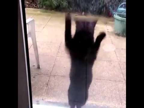 Cat dances to dark horse