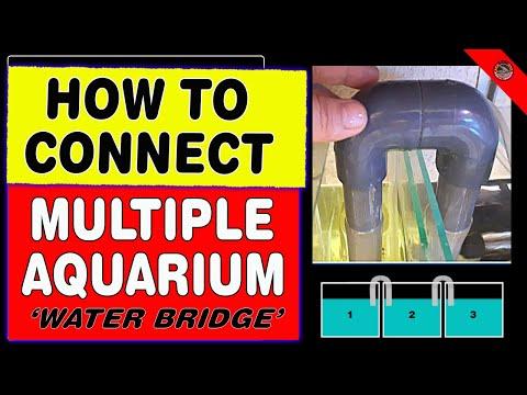 How To Connect Multiple Aquarium (water Bridge)