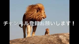 チャンネル登録お願いいたします。励みになります! 【野生動物の対決 ...
