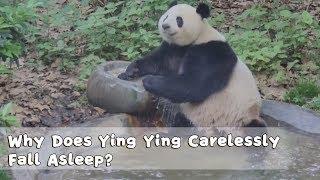 Ying Ying Carelessly Fall Asleep Because Of A Comfortable Bath | iPanda