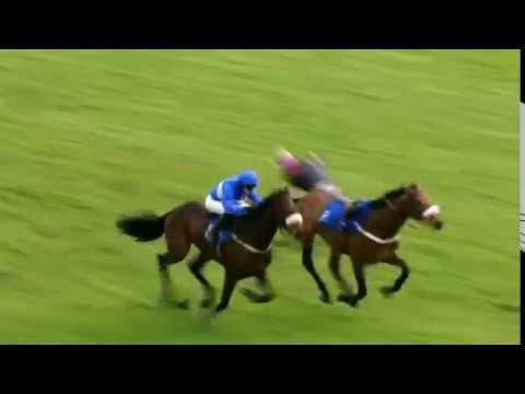 Horseracing thrills & spills compilation