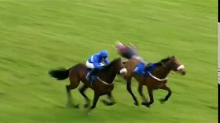 Horseracing thrills & spills compilation