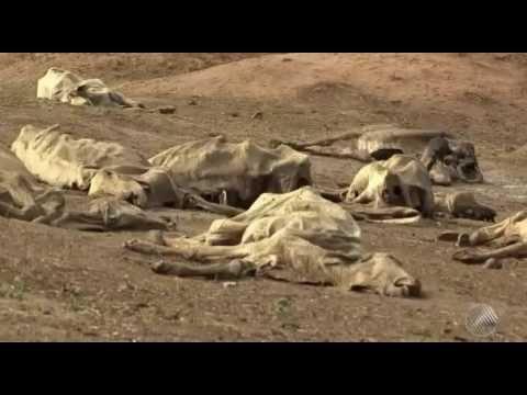 Cidade da BA tem 10 meses de seca e fazendas viram 'cemitérios' de gado