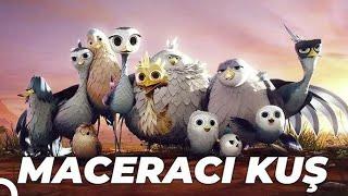 Maceracı Kuş (Yellowbird) Animasyon Filmi | Full Film İzle
