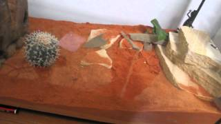 Thick-tailed gecko care