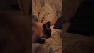 Кошка поедает резинки / funny animals