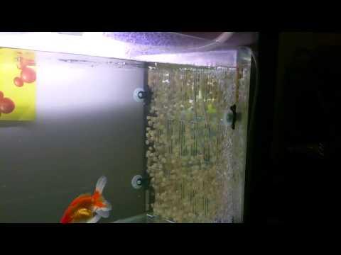 K1 kaldness media biofilter aquarium freshwater marine sump