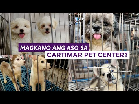 PET PRICE LIST 2020 | Dogs in Cartimar and more LATEST UPDATE.