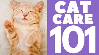 Cat Care 101 : How to take care of your cat