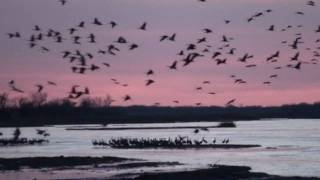 Sandhill Crane Migration in Nebraska