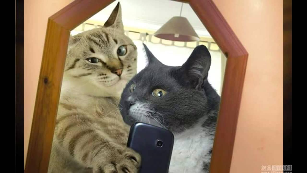 Kumpulan Gambar Dp Bbm Lucu Kucing