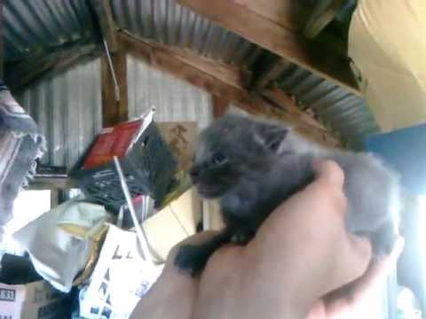 Hissing Kitten Abandoned