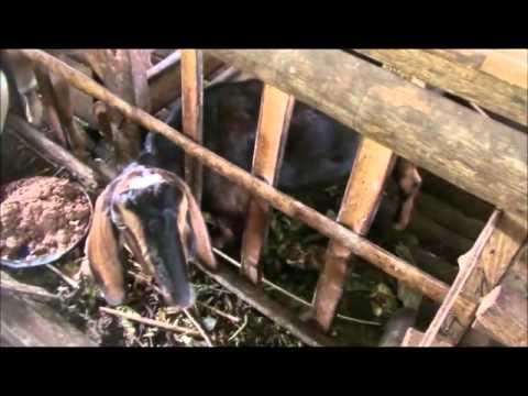 Maribojoc Organic Demo Farm   Nov 2015   Bohol Pt5