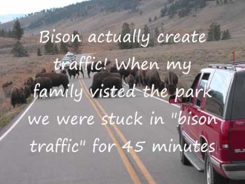 Yellowstone Project