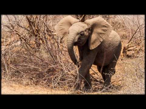 African Wildlife AIB Part 67