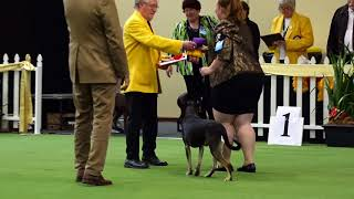 2017 Royal Adelaide Show Dog Arena   Day 7