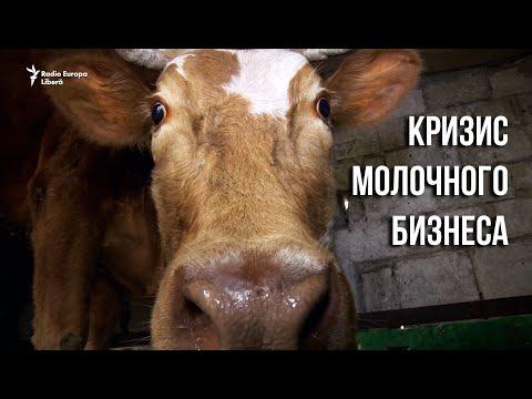 Pur și Simplu: Кризис молочного бизнеса