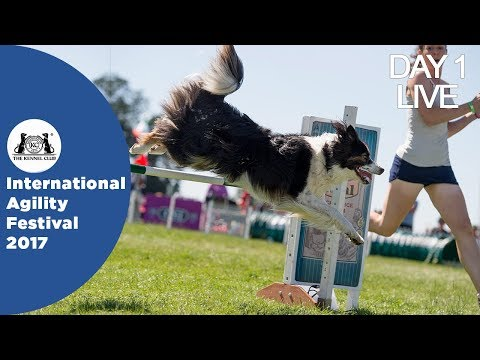 DAY 1 LIVE | International Agility Festival 2017