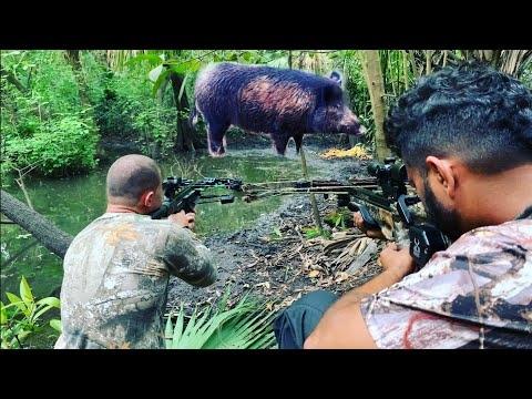 Crossbow Hunting Wild Hogs for Hog Kabobs!! Invasive Pig Removal!