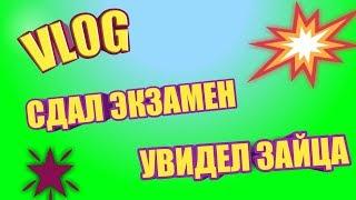 VLOG: НАШЕЛ ЗАЙЧИКА; СДАЛ ЭКЗАМЕН:)