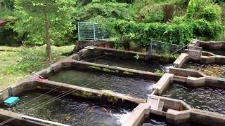 FOUNDUPS.COM: #Japanese #mountain #fish #farm