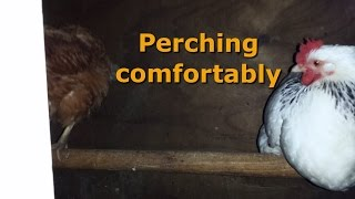 Perches - What your chickens want and wish you knew
