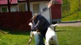 Jak rozmawiać trzeba z psem