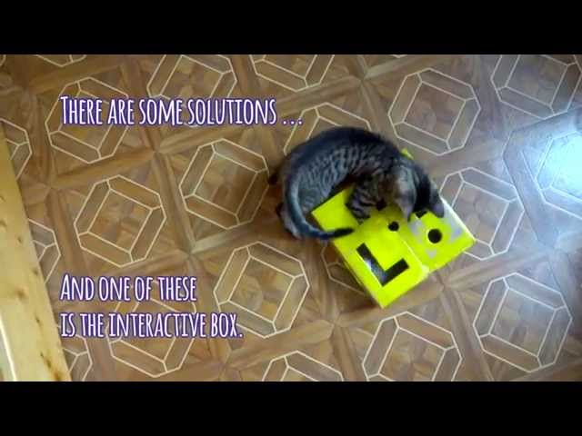 Interactive kitten box