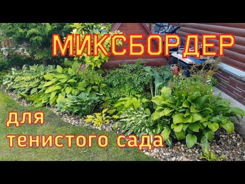 Создаю миксбордер для тенистого сада/Миксбордер с хостами/[разнообразие хост в саду]