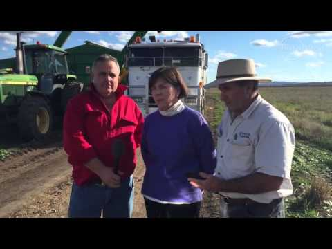 Shenhua Mine Decision On Liverpool Plains Is 'agricultural Genocide'