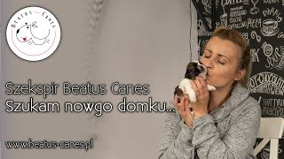 Szekspir Beatus Canes - Szukam nowego domku...
