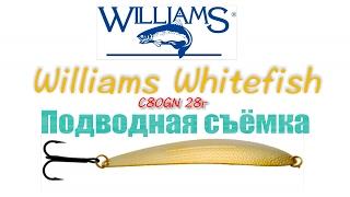Williams Whitefish video