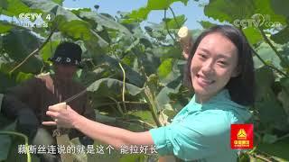 [远方的家]大运河(37) 荷藕之乡丰收时| CCTV中文国际 - YouTube