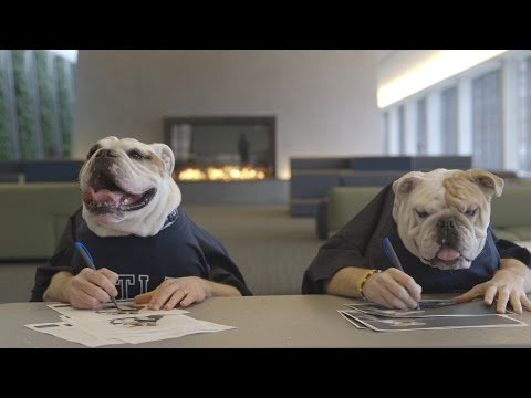 Georgetown Jack and Butler Blue III Reunited (Mascots for Georgetown & Butler)