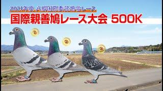 21年度八郷国際鳩舎・国際親善鳩レース大会500K帰還の様子