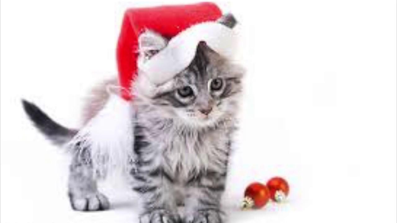 Joyeux no l les animaux youtube - Image de chat de noel ...