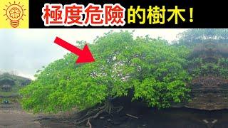 6個會奪走你性命的【可怕樹木】!需立即逃命!