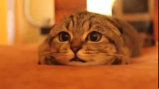 Кот смотрит ужасы