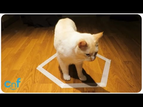 Cat Stuck In Circle | Scaredy Cat