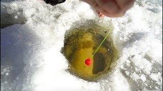 Epic Ice Fishing BATTLE With 20lb+ Monster!