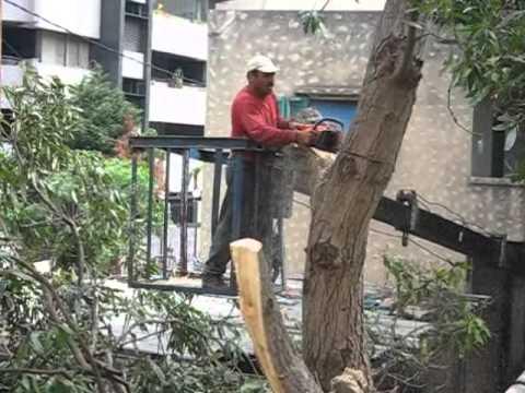 The Mango Tree- Ras Beirut