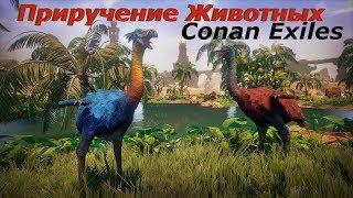 Приручение животных, Conan Exiles, Обновление