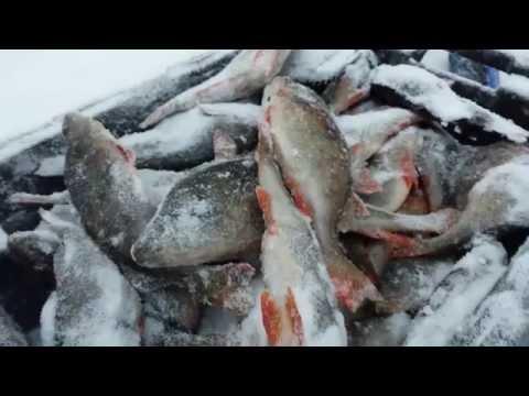 Ладожская рыба.