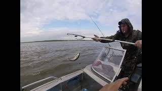 Рыбалка в Астрахани на судака на живца