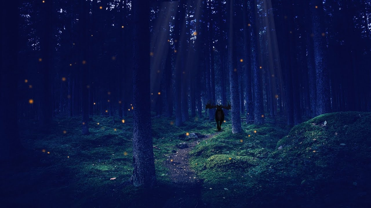 a night in the enchanted forest asmr ambience youtube