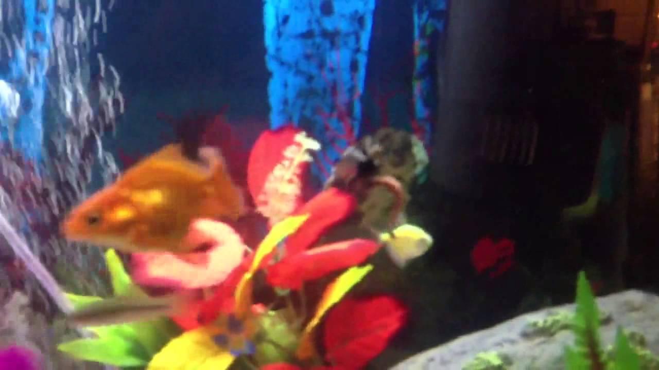 Aquarium Fishing Fail! Epic Fish Tank Prank. FUNNY - YouTube