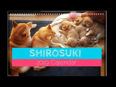 a-year-of-memories-/-shiba-inu