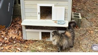 Watch Woman Provides Different Types Of Shelters For Feral Cats Based On The Cats' Personalities thumbnail