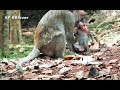 Baby Monkey Need More Power By Eat And Nurse